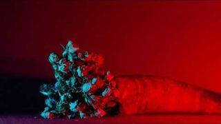 BARONESS – Seasons [OFFICIAL]